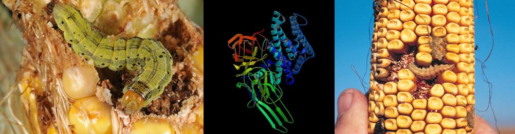 proteina bt