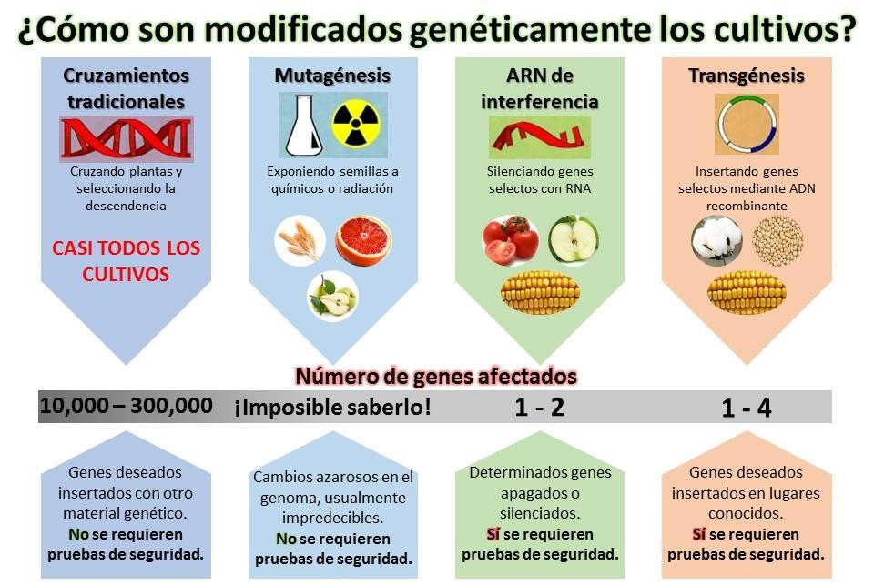 Imagen Original de The Genetic Literacy Project | Traducido por Felix Moronta.