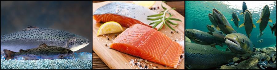 salmonportada